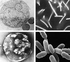 様々な古細菌